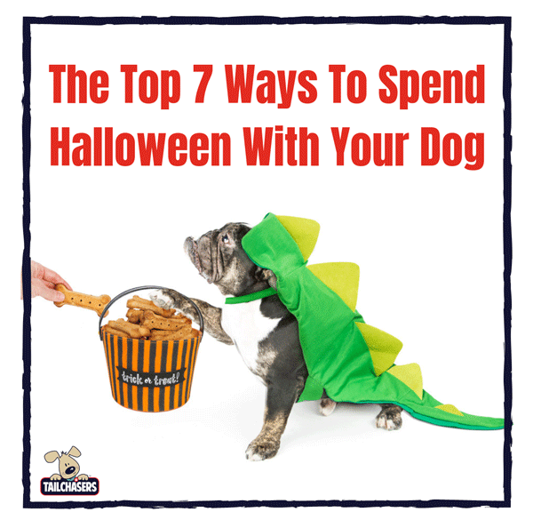 7 Ways to Spend Halloween with Your Dog