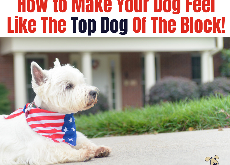 How to Make Your Dog Feel Like the Top Dog on the Block!